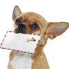 Forget the Hype: <em>Direct</em> Mail Is Not Dead