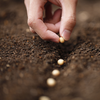 Reaping What You Sow: Growing Your Business With Social Media