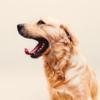 When Tech Meets <em>Pets</em>: How Technology Is Serving Man's Best Friend