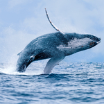 What Whales Can Teach Us About Website Navigation